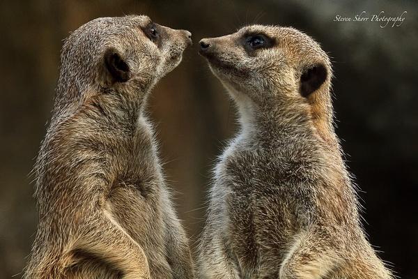 Animals by Steven Shorr