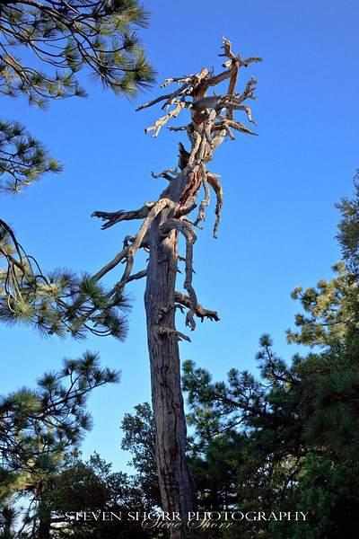 Tahquitz Peak Hike 4