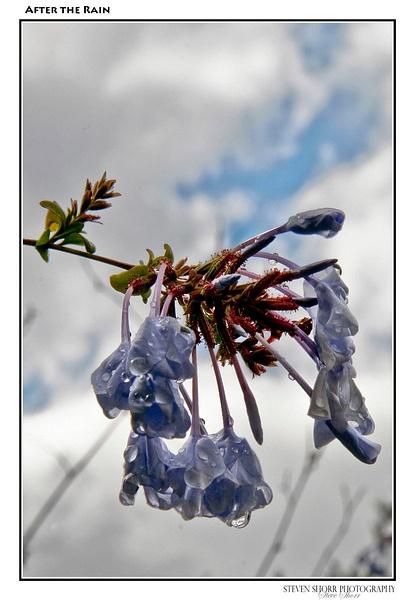 Flowers by Steven Shorr