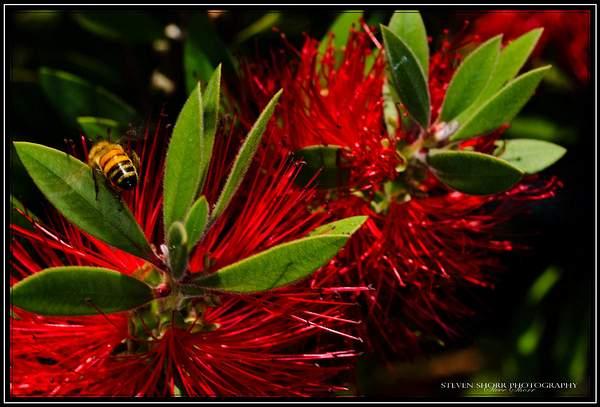 Bee n the Brush