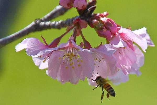 Bee Blossom Series 1