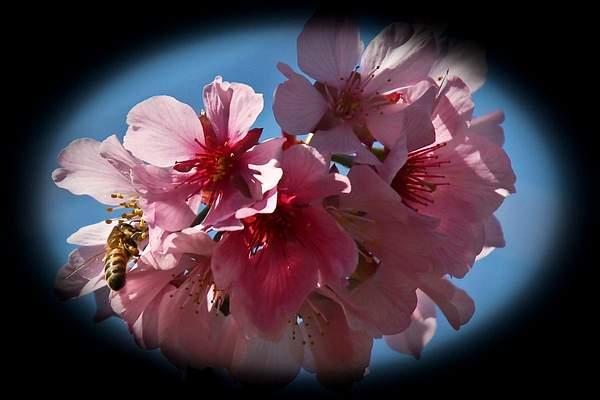 Bee Blossom Series 2