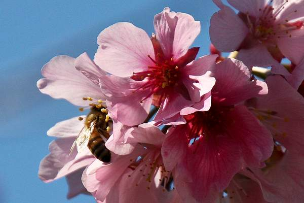 Bee Blossom Series 3