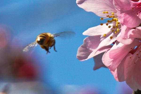Bee Blossom Series 4
