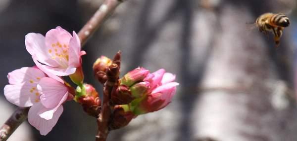 Bee Blossom Series 5