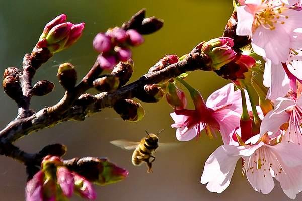 Bee Blossom Series 6