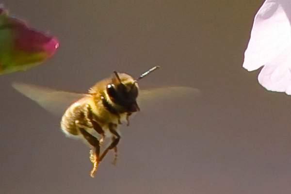 Bee Blossom Series 7