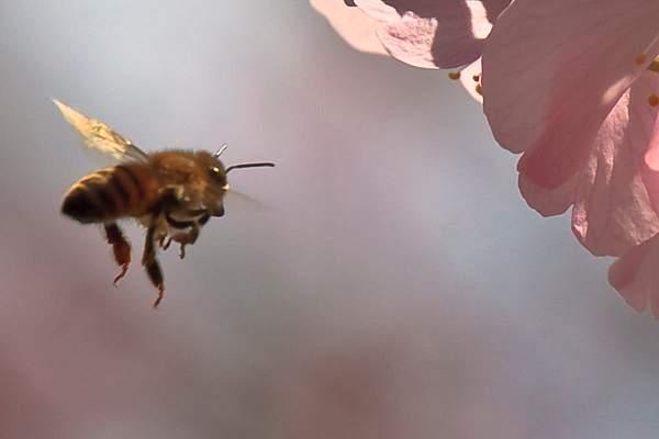 Bee Blossom Series 8