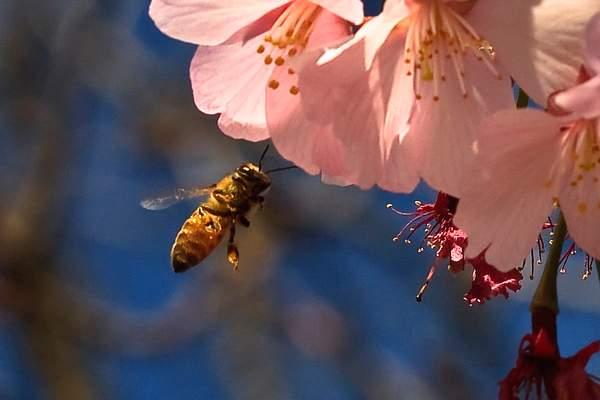 Bee Blossom Series 9