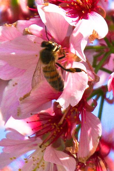 Bee Blossom Series 10