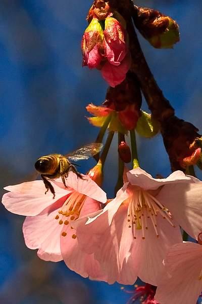 Bee Blossom Series 11