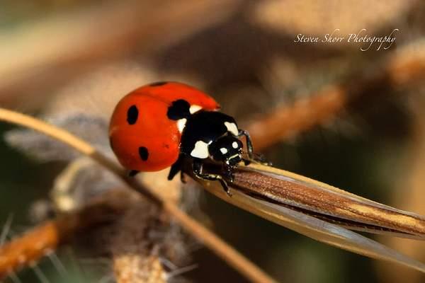 Lad Bug 2