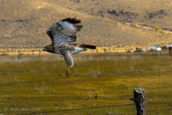 In_Flight