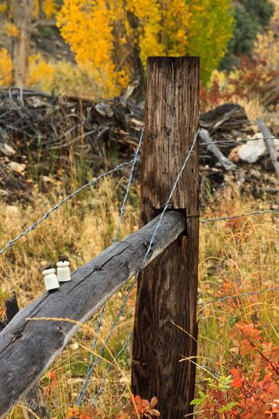 Barb_Wire_Fence