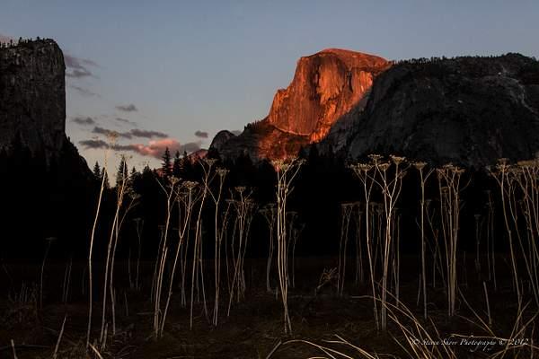 Yosemite 2012-28