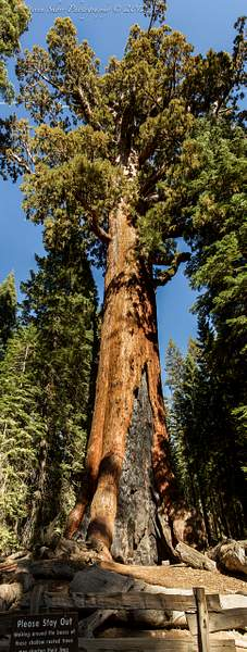 Yosemite 2012-44