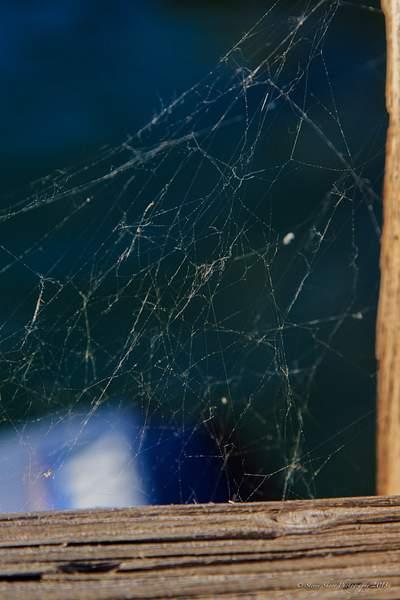 Spider Web at Goat Haunt, Montana