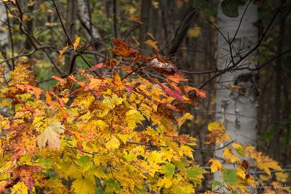 New Hamshipire Fall Colors-10