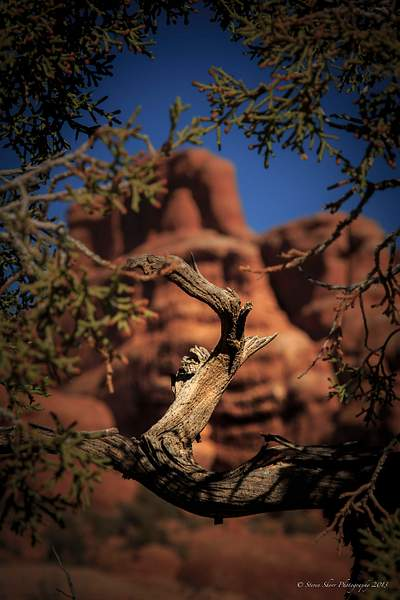 Fiery Furance Area Arches NP-3