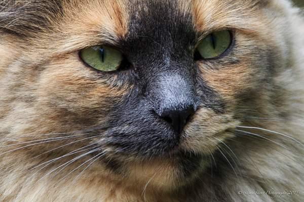 Ketchikan Cat