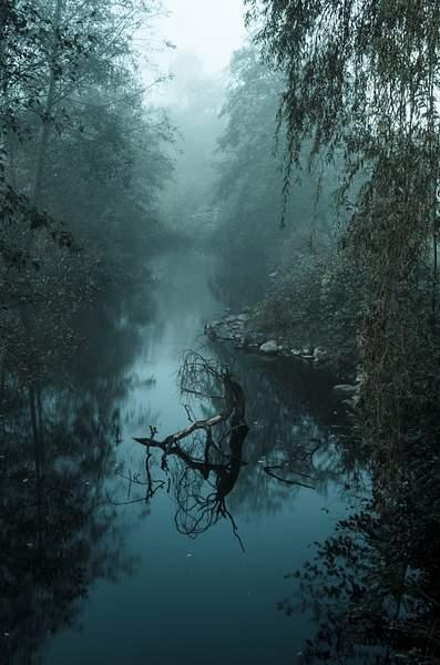 Fog-Flection