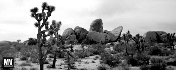 Joshua Tree: Half Dome