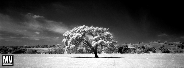 Landscape: Silver-Based B&W Panorama Prints by Michael Mariant