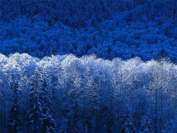 Nature by salahslickpick