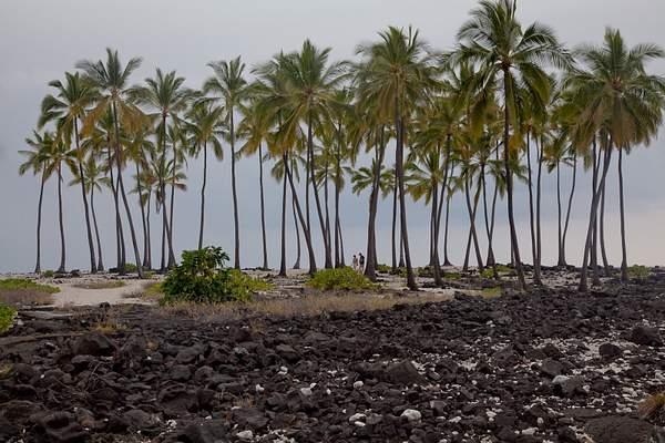 People Among the Palms