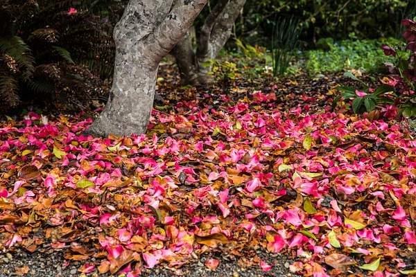 Mendocino Coast Botanical Garden.jpg