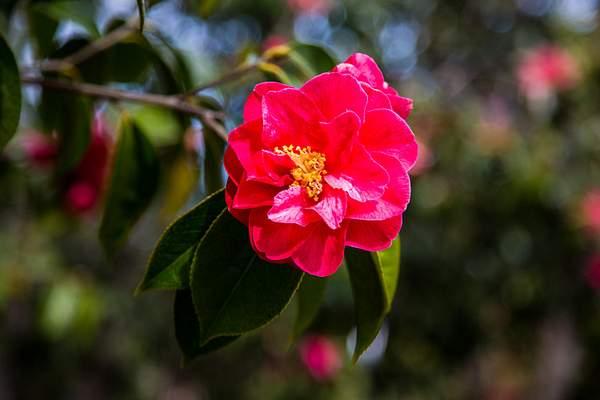 Mendocion Coast Botanical Garden-2