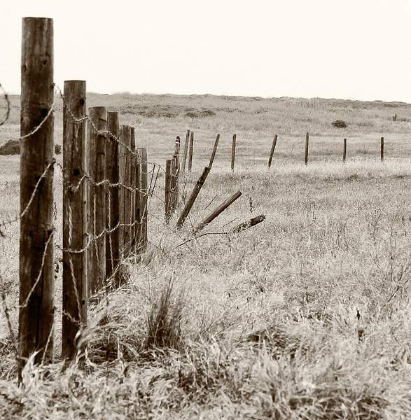 Old Fence in Fiscalini Ranch Preserve (since removed).jpg