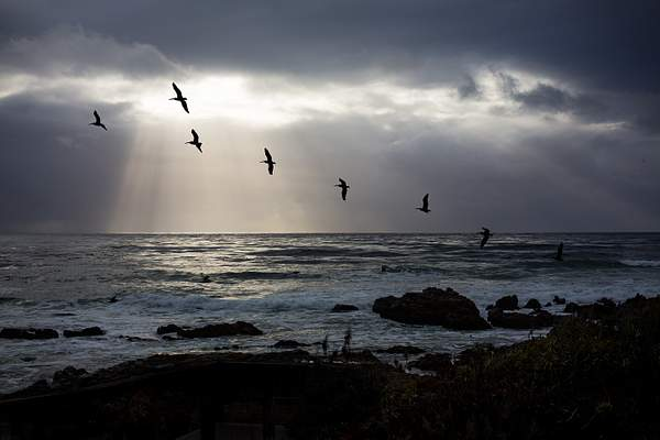 Pelicans & Clearing Storm Couds.jpg