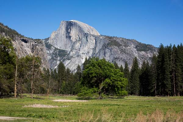 Half Dome from Meadow on Northside Drive.jpg