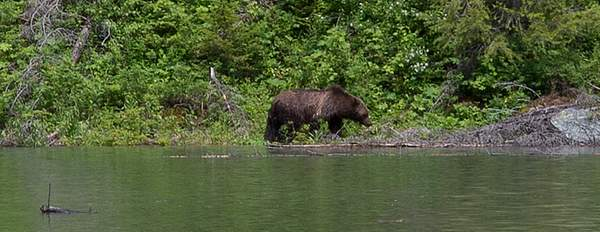 Grizzley at Avalance Lake-Edit.jpg