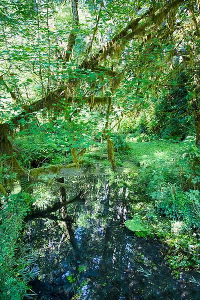 Hoh Rain Forest 3.jpg