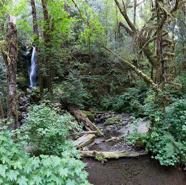 Merriman Falls, Quinalt.jpg
