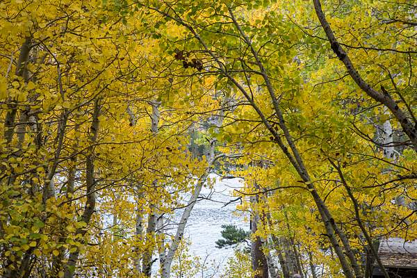Silver Lake Aspens.jpg