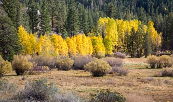 Fall Colors on June Lake Loop.jpg