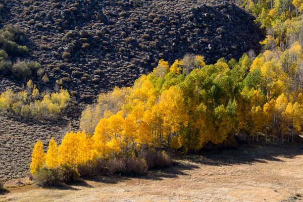 Aspen Grove from Conway Summit.jpg