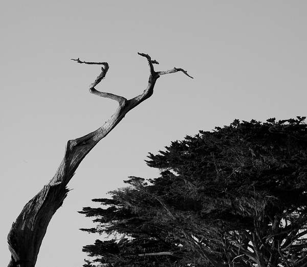 Juxtiposition on the 17 Mile Drive.jpg
