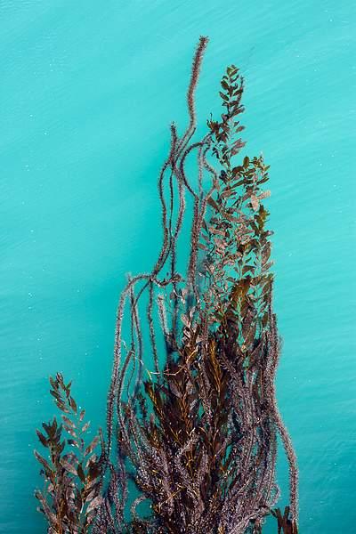 San Simeon Pier Seaweed-1.jpg