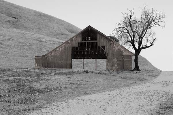 Point Reyes Barn and Tree-Edit.jpg