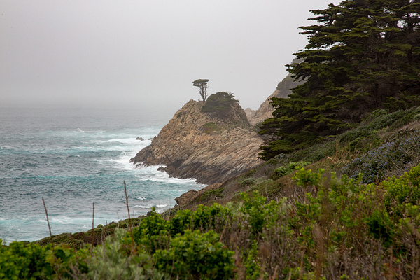Point Lobos by Harrison Clark