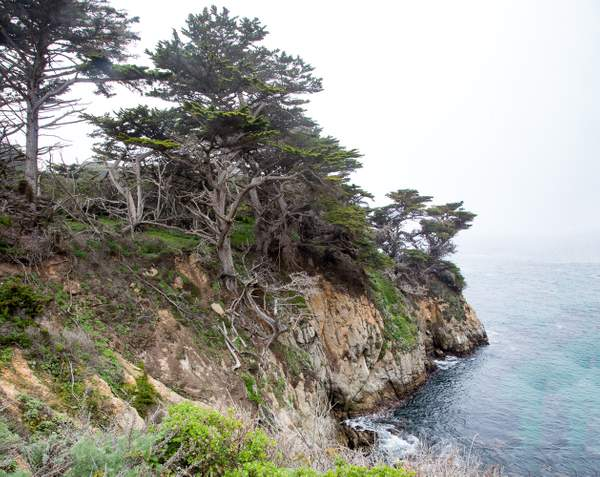 Point Lobos-21
