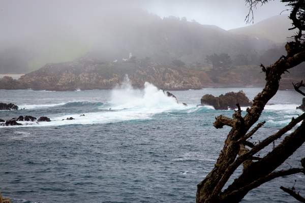 Point Lobos-14