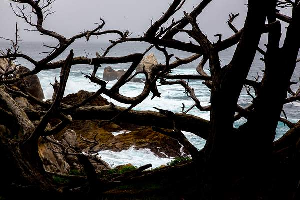 Point Lobos-11