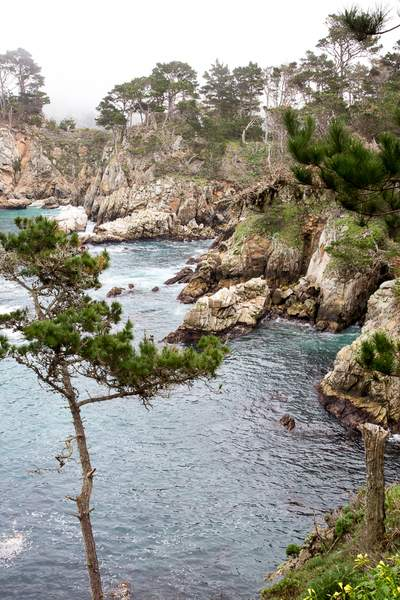 Point Lobos-10