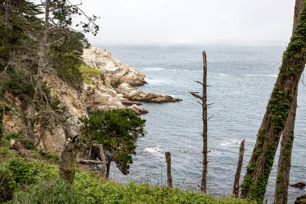 Point Lobos-7