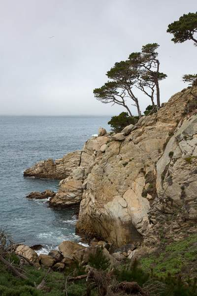 Point Lobos-6